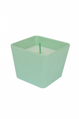 Pleasing-muscat-green-800x600